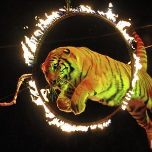 Цирки Гидроторфа