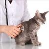 Ветеринарные клиники в Гидроторфе